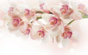 主恩玫瑰園-生前告別式-粉紅音樂饗宴